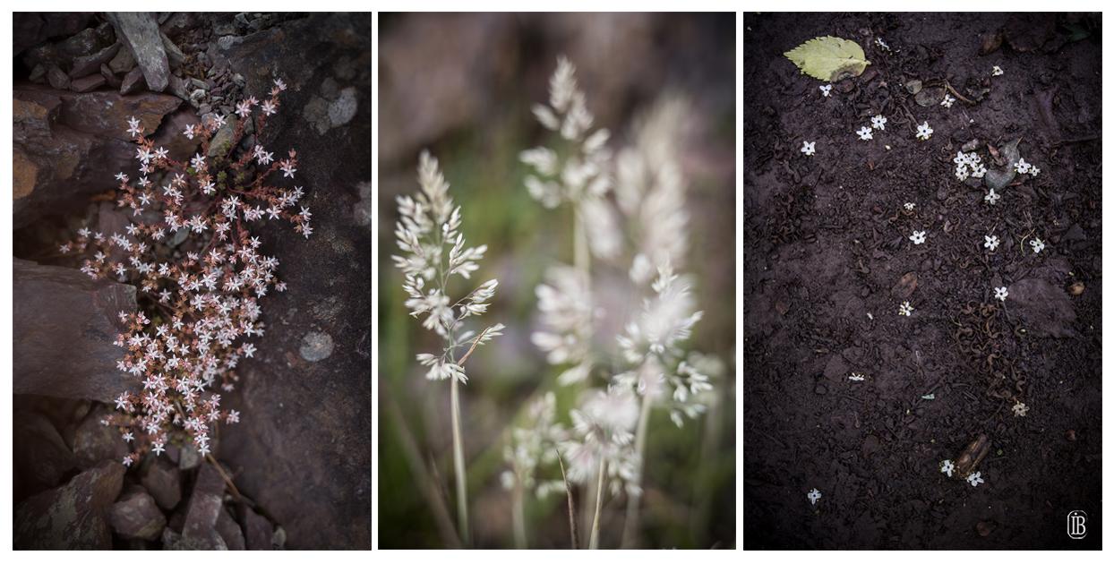 Repérage flore